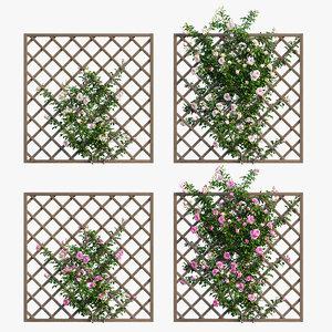 rose plant set 15 3D model