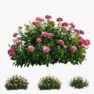plant rose set 03 3D model