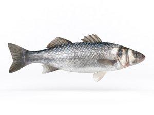 3D fresh seebass fish model