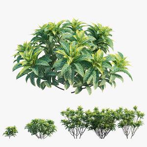 croton plant set 03 model