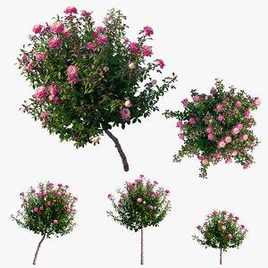 3D plant rose set 05