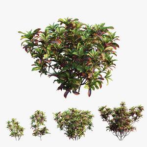 3D croton plant set 02 model