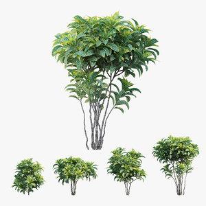 3D croton plant set 04