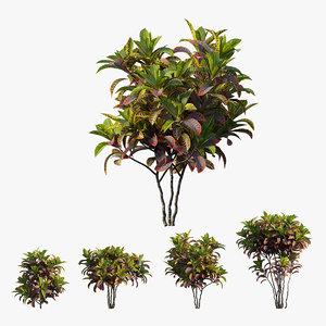 3D croton plant set 05