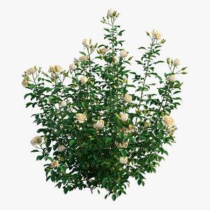 plant rose set 08 3D model
