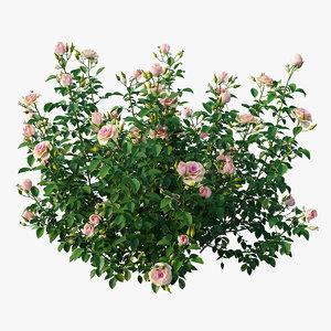 plant rose set 07 3D model