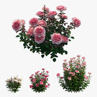 Rose plant set 21