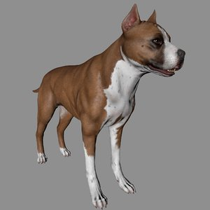dog pitbull 3D model