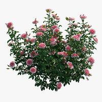 Rose plant set 22