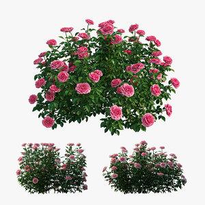 3D rose plant set 24 model