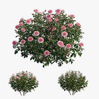 Rose plant set 28
