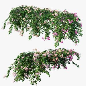 3D rose plant set 31 model