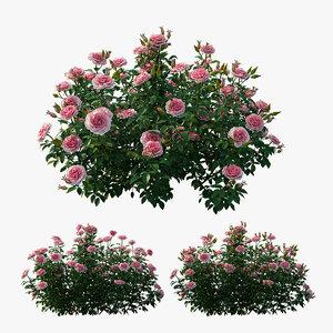 rose plant set 25 3D model