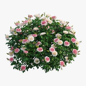 3D rose plant set 26 model