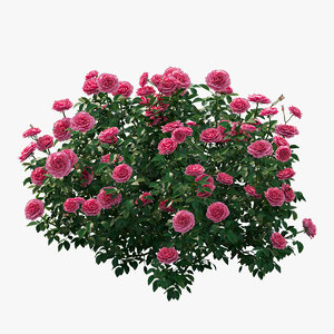 rose plant set 27 3D model