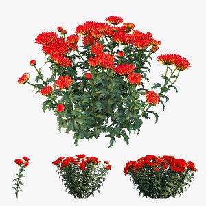 3D chrysanthemum flower plant set
