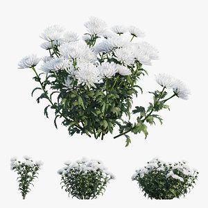 3D chrysanthemum flower plant set model