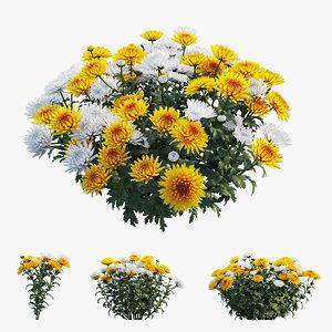 3D model chrysanthemum flower plant set