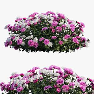 chrysanthemum flower plant set 3D