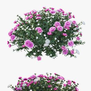 chrysanthemum flower plant set model