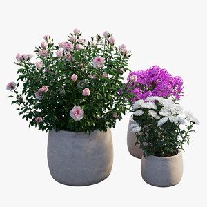 grow flowers pots rose 3D model