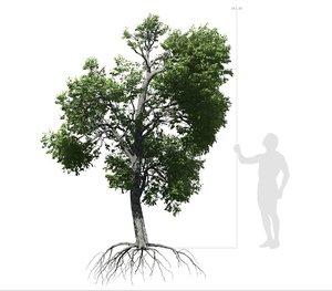 broadleaf tree 003 3D model