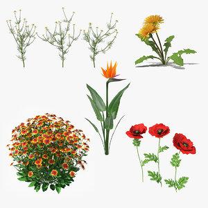 flowering plants 3 3D model