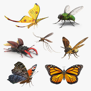 rigged flying insects 2 3D