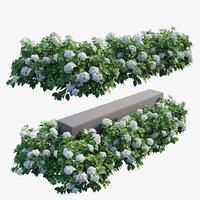 Hydrangea Plant set 28