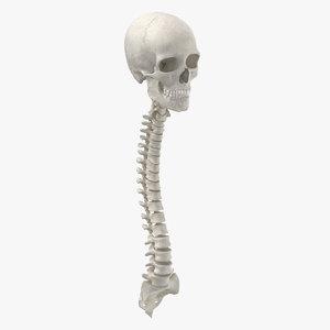 real human spine bones model