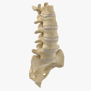 real human lumbar sacrum model