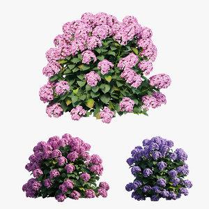 3D hydrangea plant set 23