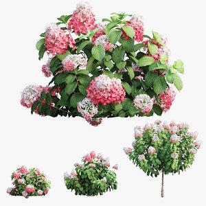 plants hydrangea set 11 3D model