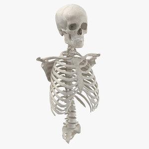 real human rib cage model
