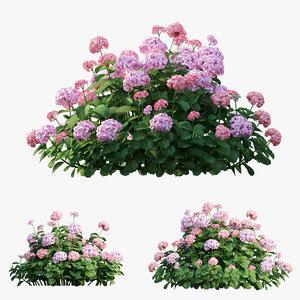 plants hydrangea set 20 3D model