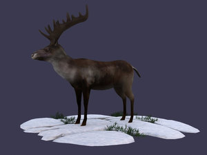 reindeer stag elk northern 3D model