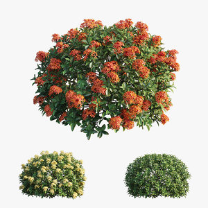 3D ixora plant set 11 model