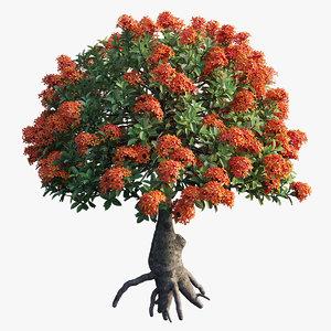 3D ixora plant set 14 model