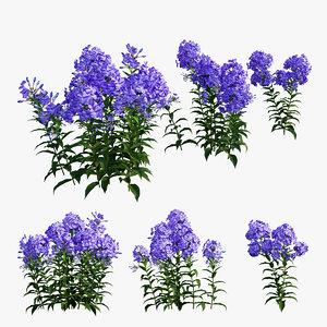 phlox paniculata blue garden 3D model
