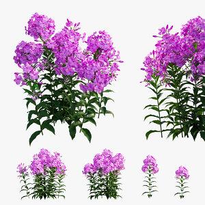 phlox paniculata larissa flowers 3D