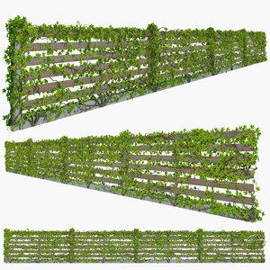 fence ivy model