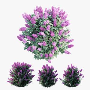 3D model dwarf lilac plant set