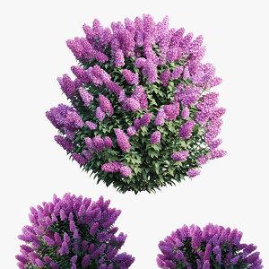 dwarf lilac plant set 3D
