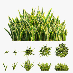 3D sansevieria plant