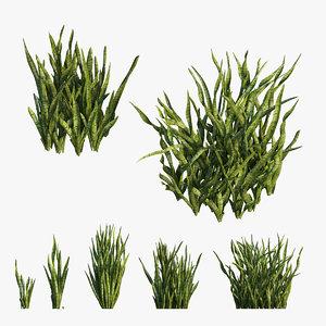 3D model sansevieria trifasciata plant 03