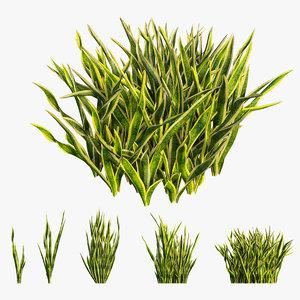sansevieria plant 02 3D