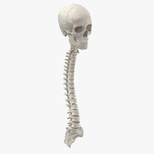 3D real human spine bones model
