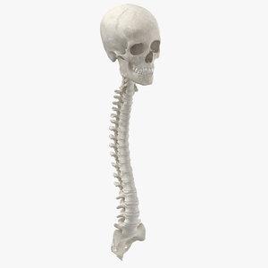 real human spine bones 3D