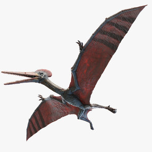 3D model pterodactyl pterodactylus