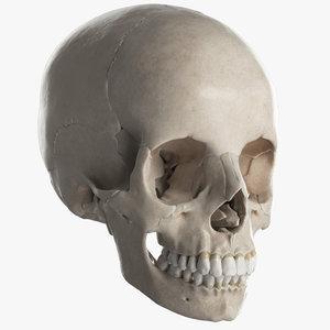 female skull bones 3D model
